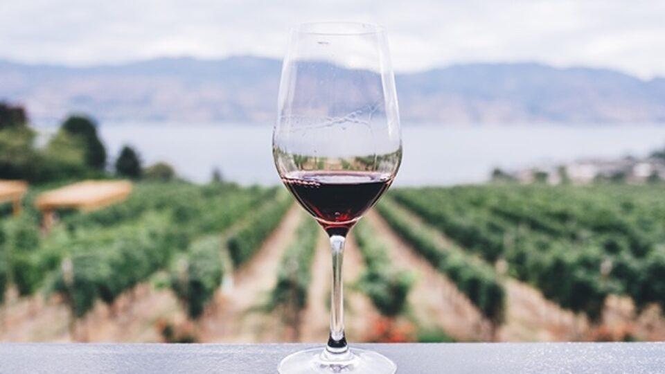 The origin of wine